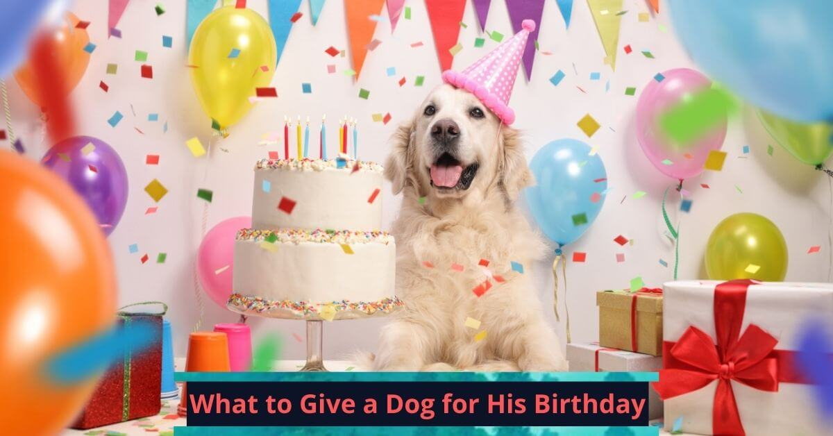 What to Give a Dog for His Birthday