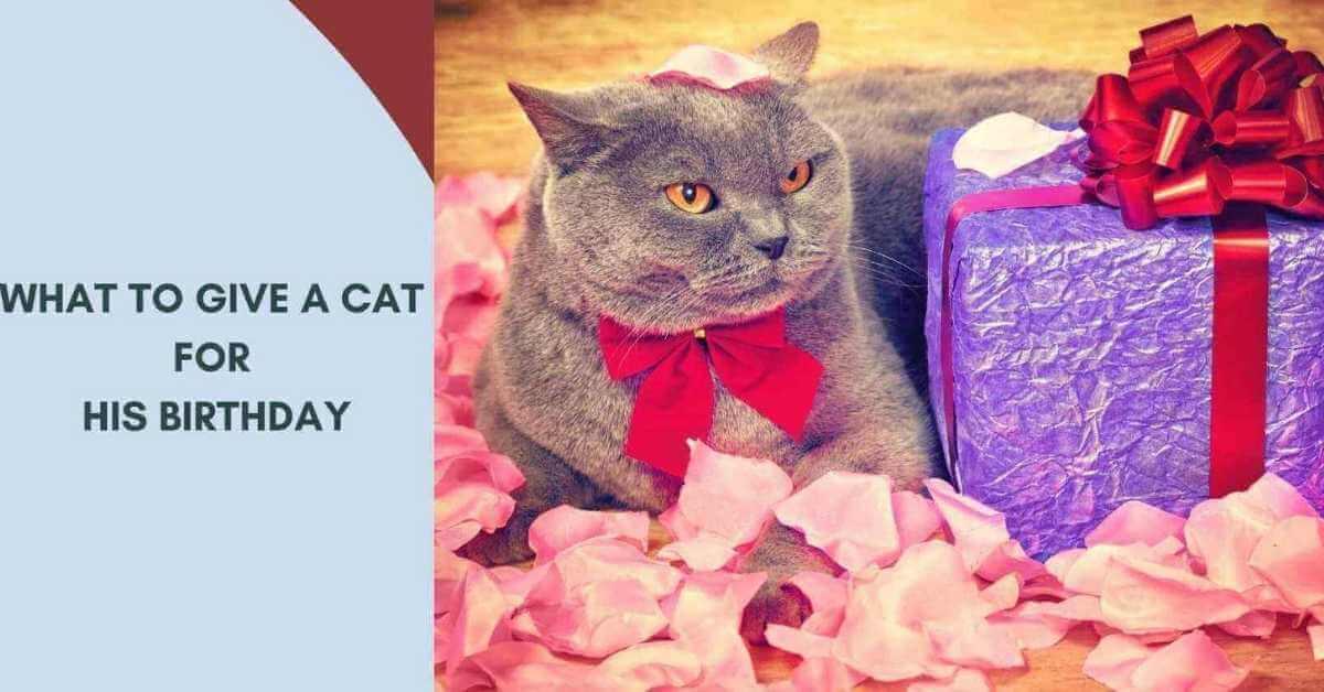 Cat Birthday Gift Ideas